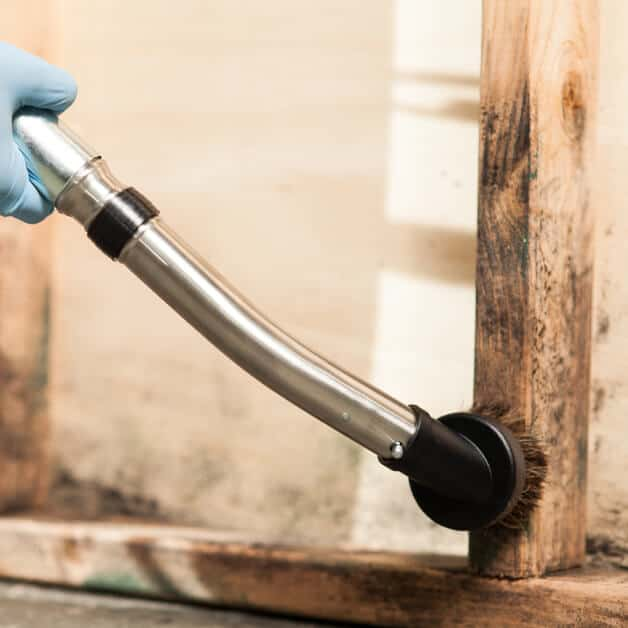 mold removal on wood