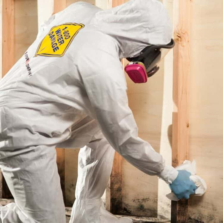 Service tech mold removal